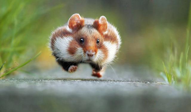 صورة الصور الفائزة في مسابقة تصوير الحياة البرية المضحكة لعام ٢٠١٥