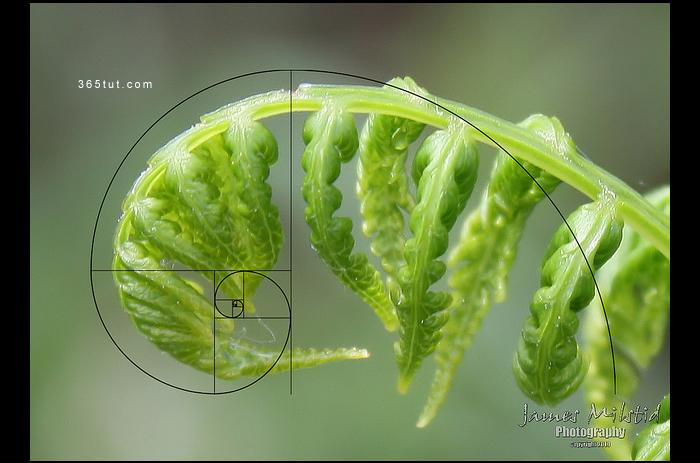 صورة [ دروس تصوير ] الدرس رقم ١٨٩ – القاعدة الذهبية في التصوير – قانون فيبوناتشي