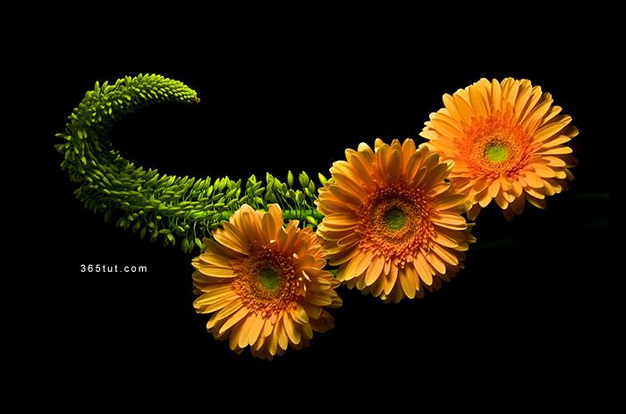 صورة [ دروس تصوير ] الدرس رقم ١٦٣ – تصوير الورود