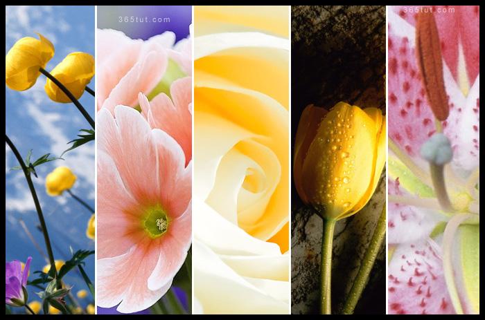 صورة نتائج مسابقة ٣٦٥ الأولى لتصوير الورود – المرحلة النهائية